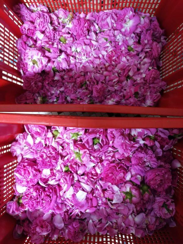 a crate of rose petals